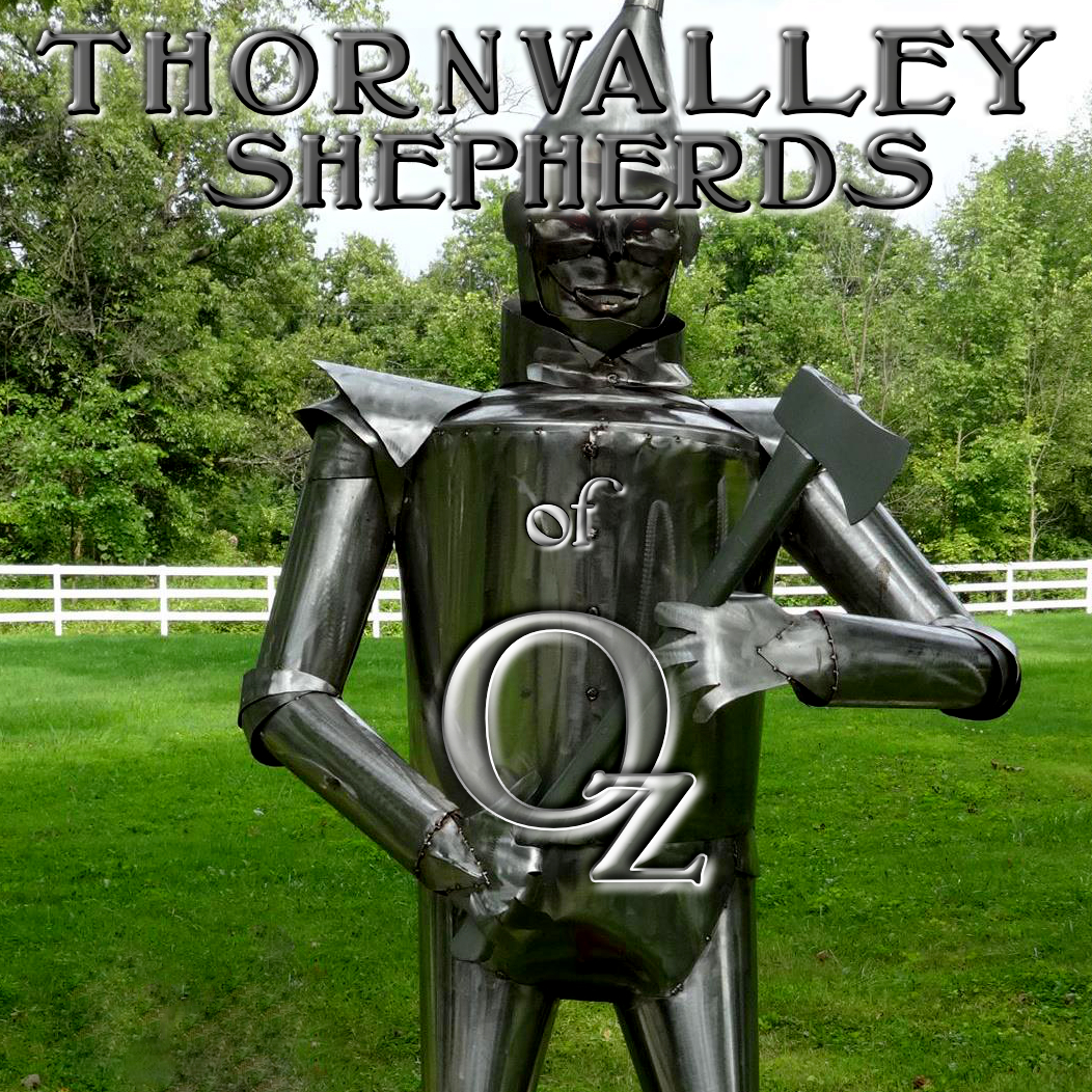 Thornvalley Shepherds